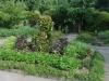 Small Garden Square In Culinary Malabar Spinach