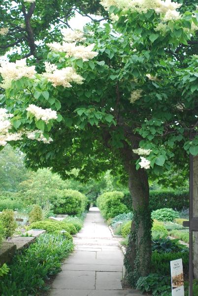 Edible Flower Garden | Western Reserve Herb Society