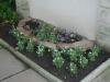 Late April Plants